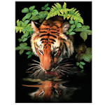 15880 - Thirsty Tiger Paint by Numbers Set (PJS57)