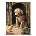 15884 - Labrador Puppy Paint by Numbers Set (PJS50)
