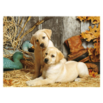 Clementoni Hunting Dogs - 1500 Pc Puzzle